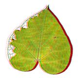 Multicolors Unknown Leave royalty free stock photo