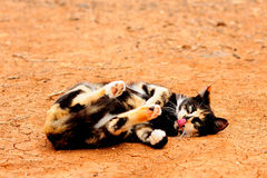 Multicolour cat. And long tongue royalty free stock image