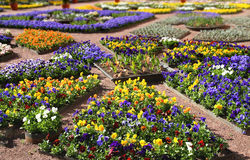 Multicolour flower beds Stock Images
