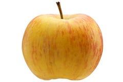 Multicoloured apple Stock Photography