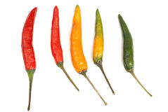 Multicoloured chili peppers Stock Photo