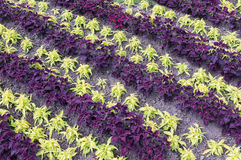 Multicoloured flower bed Royalty Free Stock Images