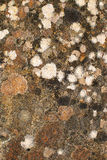 Multicoloured Lichen on rock Royalty Free Stock Image