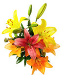 Multicoloured lilies Royalty Free Stock Photo