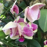 Multicoloured orchid. In Kew Gardens royalty free stock images