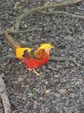 Multicoloured ptak zdjęcie royalty free