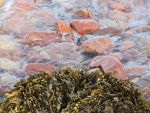 Multicoloured stones, waves with foam Royalty Free Stock Photography