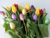 Multicoloured Tulips Stock Photography