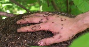 A multidão de formigas em um formigueiro vídeos de arquivo