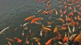 Multidão dos peixes em Vietname imagens de stock