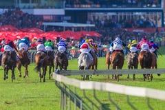 Multidões retas finais da ação da corrida de cavalos Fotos de Stock Royalty Free