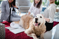 Multiethnic businesswomen petting dog while sitting on the floor at office. Cropped shot of multiethnic businesswomen petting dog while sitting on the floor at royalty free stock photos