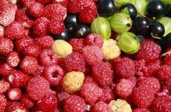 Multifruit. Different berries make a still-life Stock Photos