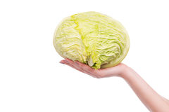Multifunctional cabbage. Royalty Free Stock Images