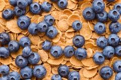 Multigrain muesli用莓果 库存照片