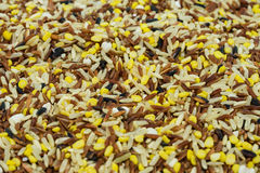 Multigrain Rice Royalty Free Stock Photos