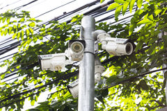 Multiple Angle Outdoor CCTV Camera on the Pole near the Tree Stock Image
