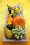 Multiple baby pumpkins. Royalty Free Stock Photos