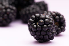Multiple blackberries staggered in the depth. Arrangement of multiple blackberry staggered in depth to create a depth-of-field effect on a purple background Stock Images