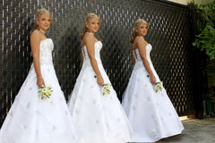 Multiple Bride Stock Photo