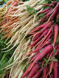 Multiple Carrots 1. Multi-colored carrots Stock Image