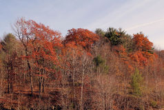 Multiple colors of Autumn Royalty Free Stock Photography