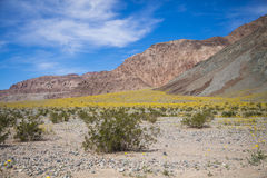 Multiple colors of the desert in Death Valley Stock Images