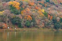 Multiple colours tree in Arashiyama. During Autumn season,Kyoto,Japan Stock Image