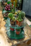 Multiple combined cactus decor together on the dessert dish on the fruit line buffet at the garden in Thailand. Multiple combined cactus decor together on the royalty free stock photography