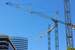 Multiple construction cranes work side by side. Stock Photos
