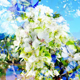 Multiple exposure of cherry trees in full bloom Royalty Free Stock Photos