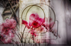 Multiple exposure of flowers Stock Photo