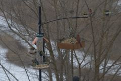 Frenzy at the Feeders stock image