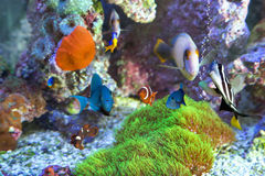 Multiple Fish at home aquarium Stock Photo
