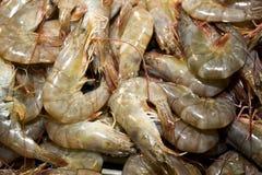 Multiple fresh raw prawns. Close up -food background Royalty Free Stock Photo