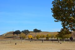Paso Robles Fall Vineyard with Oak Tree and amazing autumn colors. Multiple grape varietals change colors at different times during the fall season creating a Stock Images