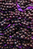 MULTIPLE GRAPES Royalty Free Stock Photos