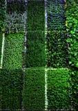 Grass Patterns Stock Photos