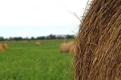 Hey bails in a field. Multiple hay bails in the field and a close up of one. The others are blurry in the background royalty free stock images