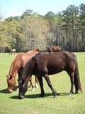 Multiple Horses Stock Image