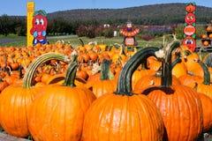 Multiple Large Pumpkins stock photo