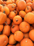 Multiple Large Pumpkins. Pattern of Multiple Large Pumpkins royalty free stock photos
