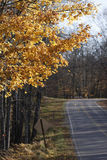 Multiple leaves falling from tree in late fall along a forest road Royalty Free Stock Photos