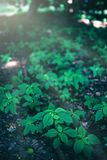 Multiple little green plants growing in the forest. stock photos