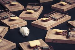 Multiple mouse traps with cheese stock photography