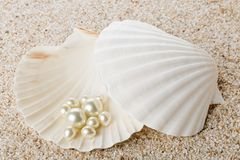 Multiple pearls in sea shell on sand Stock Photos