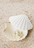Multiple pearls in sea shell on sand Stock Photo