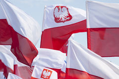 Multiple Polish Flags Flying against the Sky Royalty Free Stock Image