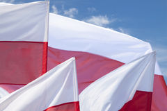 Multiple Polish Flags Flying Against the Sky Stock Images