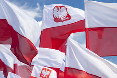 Multiple Polish Flags Flying Against the Sky Stock Image